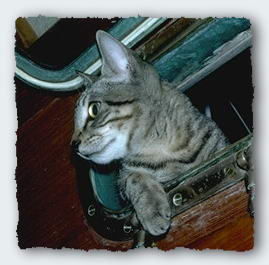 Walter Cat looks through the porthole over the dinette to check on our activities in the cabin.