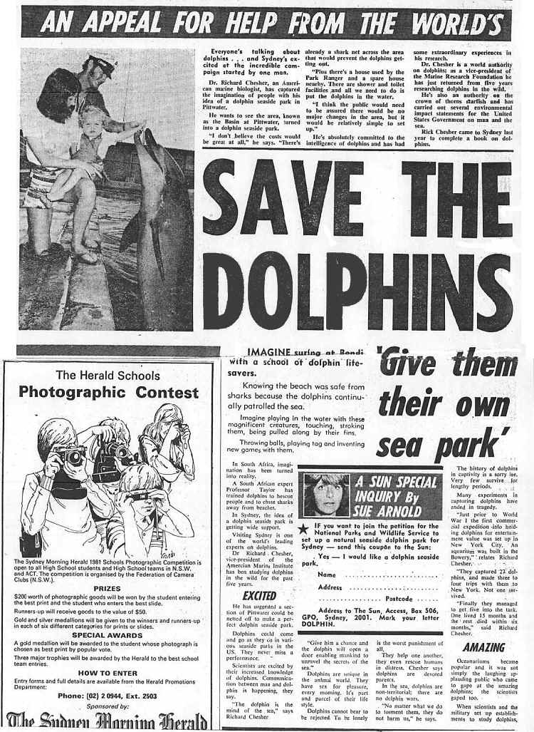 Dolphin article in Sun Herald